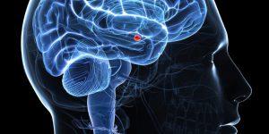 amygdala - fizetésemelés alatt aktív lesz